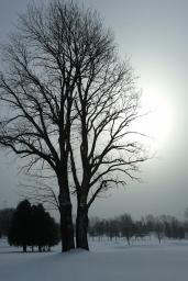 Light - Mary Giles - December 2012
