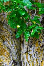 Foliage - Mary Giles - September 2019