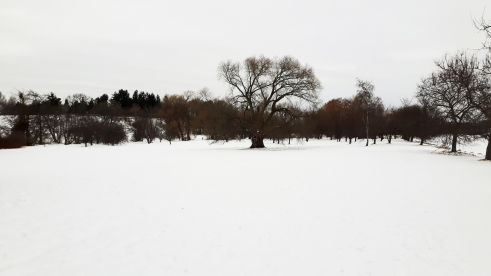 Vincent Massey Park - Mary Giles - January 2018