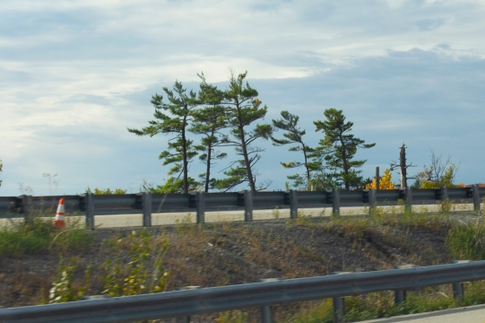 Hwy 7 - 1 - Mary Giles - October 2019
