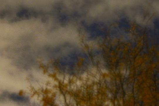 Night Tree 7 - Mary Giles - November 2019
